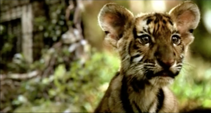 Aircel- Save OurTigers