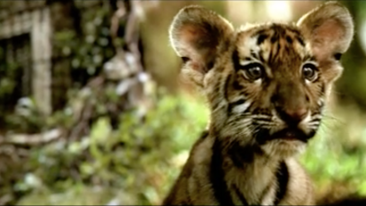 Aircel- Save Our Tigers